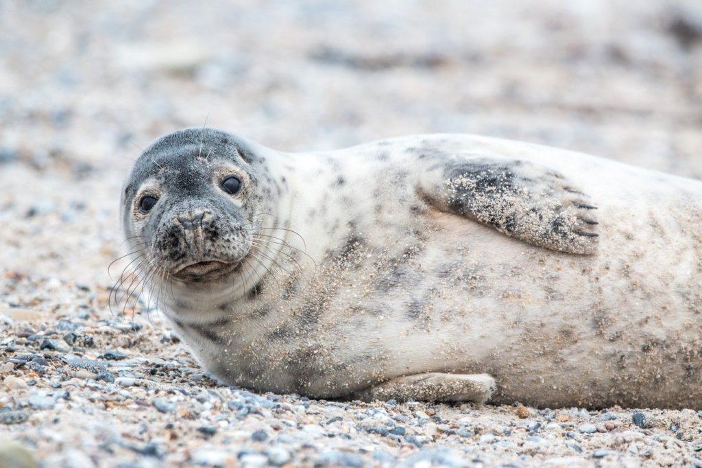Comparison of Arctic and Antarctic fauna