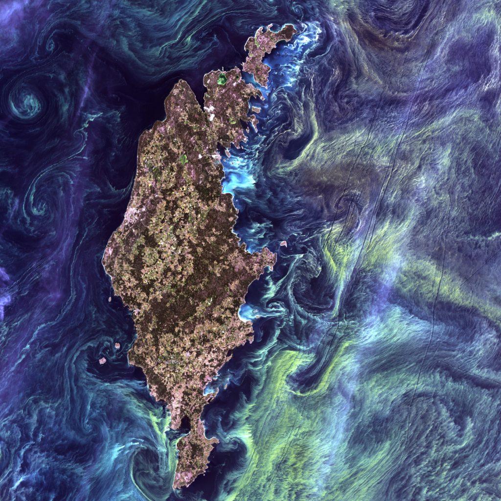 Arctic phytoplankton