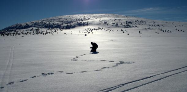 Snow in the Arctic ecosystem